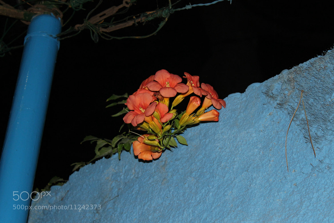 Photograph Red and Blue by Ashira (Stefania) on 500px