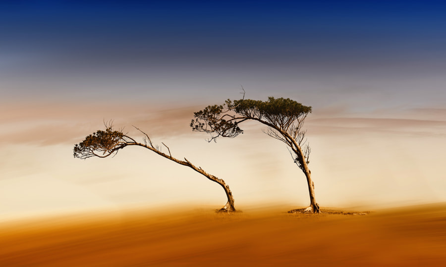 Windswept Dream by Margaret Morgan on 500px
