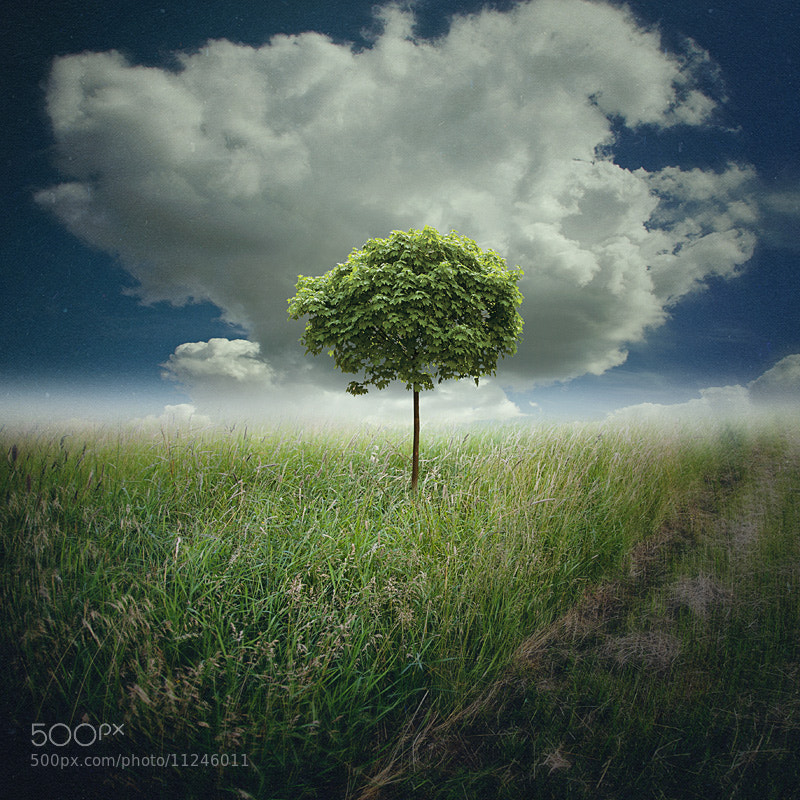 Photograph about the tree by coleopter ! on 500px