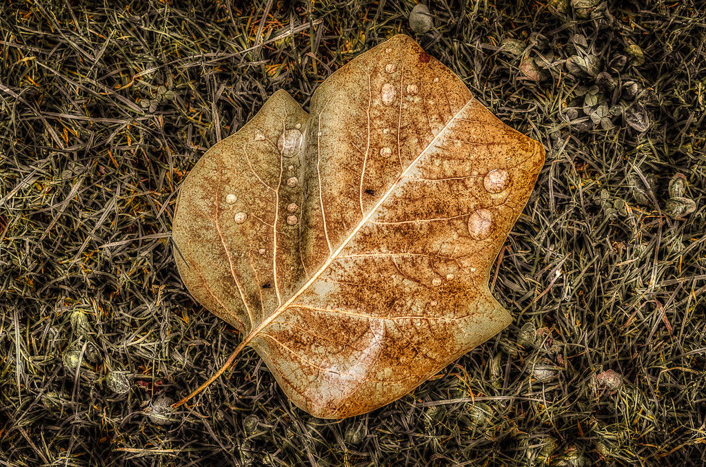 Photograph Autumn is Coming by Tony Garcia on 500px