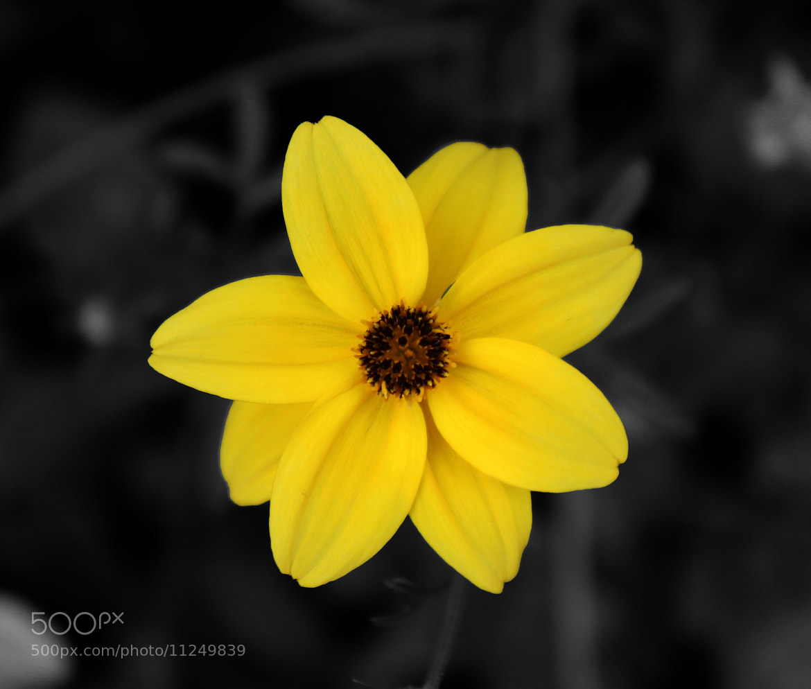 Photograph Yellow Flower by Hayk Gabriel Photography on 500px