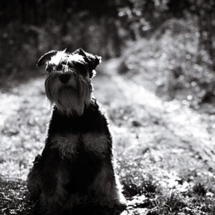Tesla my Dog