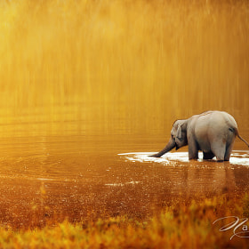 Thai elephant  by Sasi - smit (OF-PSD)) on 500px.com