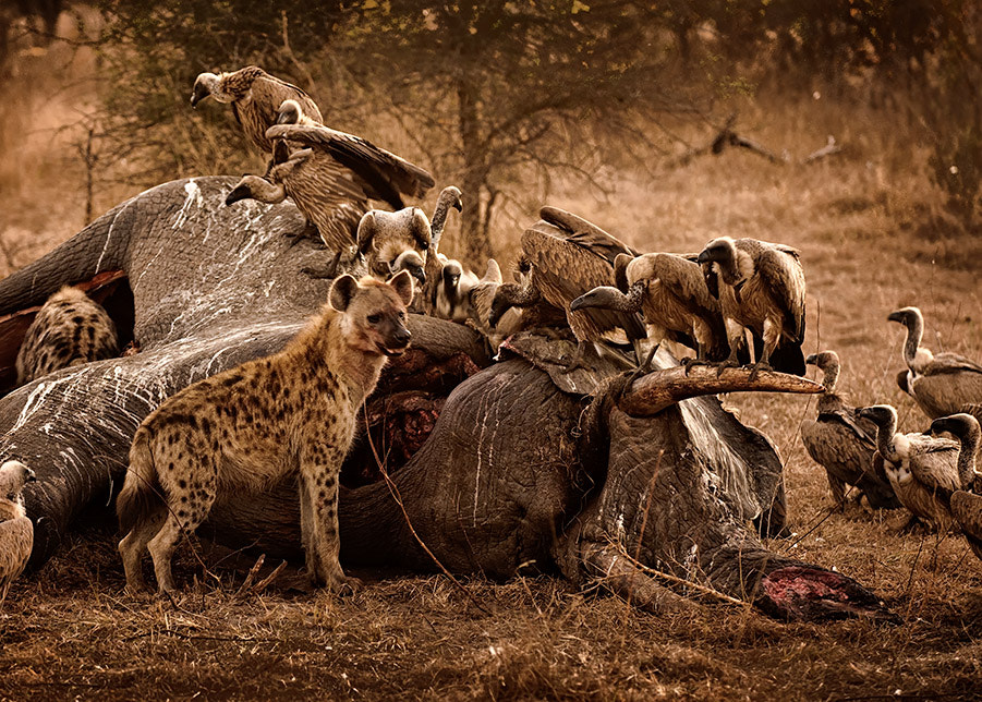 Photograph A Bushveld Death by Christopher R. Gray on 500px