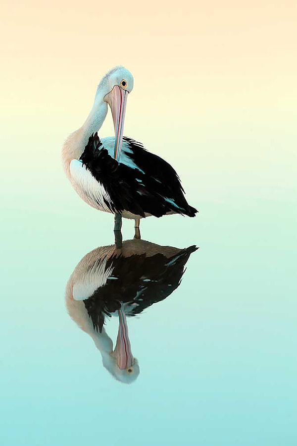 Reflection by Bret Charman on 500px.com