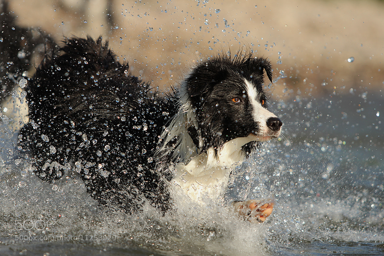 Photograph splash ...... by Mathias Ahrens on 500px