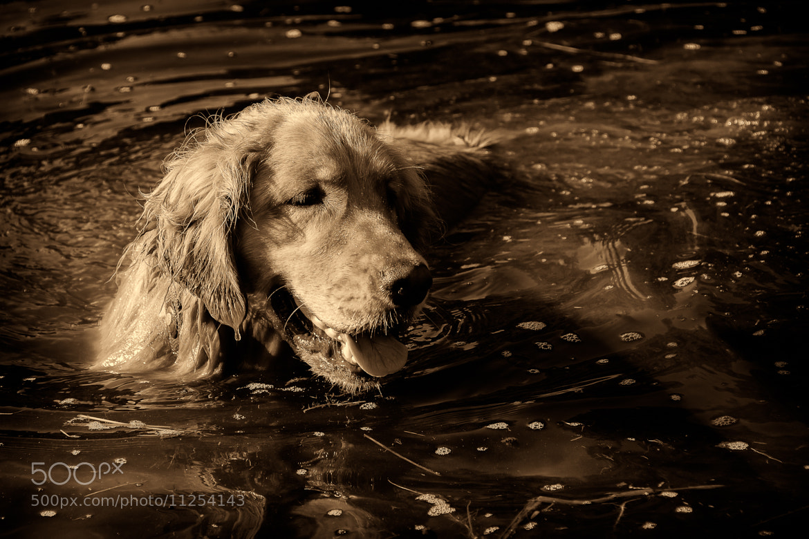 Photograph Always been a water dog. by Paul Grinnell on 500px