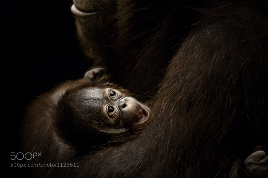 Photograph New life - welcome Changi by Manuela Kulpa on 500px