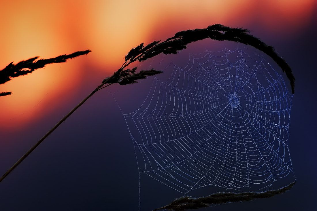 Photograph Delicacies of Dawn... by Jeremy Cram on 500px