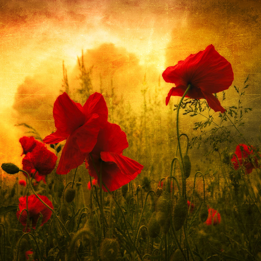 Photograph Red For Love by Philippe Sainte-Laudy on 500px