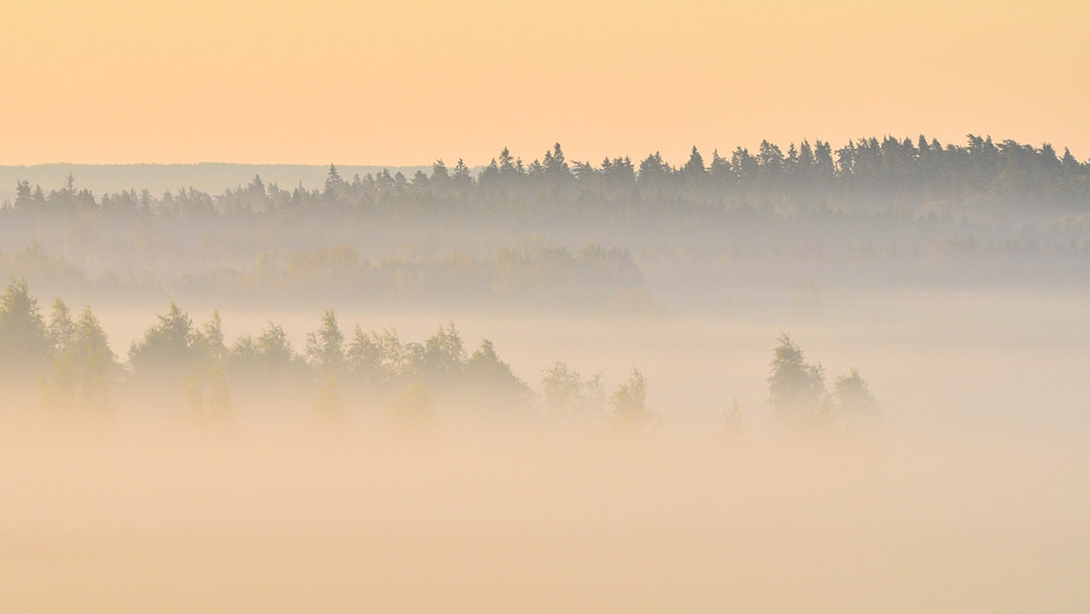 Photograph Foggy sunrise by Anton Hallik on 500px