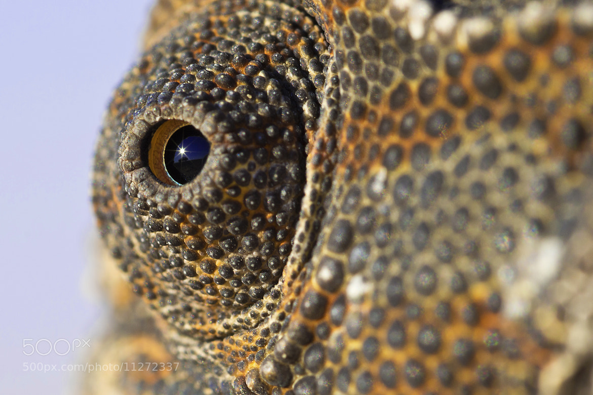 Photograph Eye of Monster! by Adel Esmael on 500px