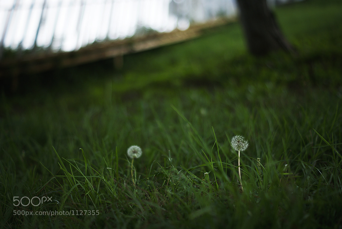 Photograph Untitled by windybear on 500px