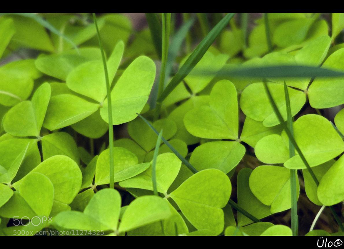 Photograph Green by Ülo R on 500px