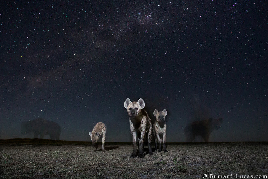 Spirits of the Night by Will Burrard-Lucas on 500px.com