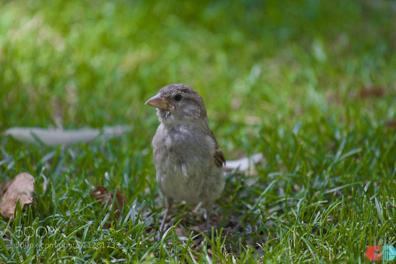 Photograph little bird by Guillermo Zancada on 500px