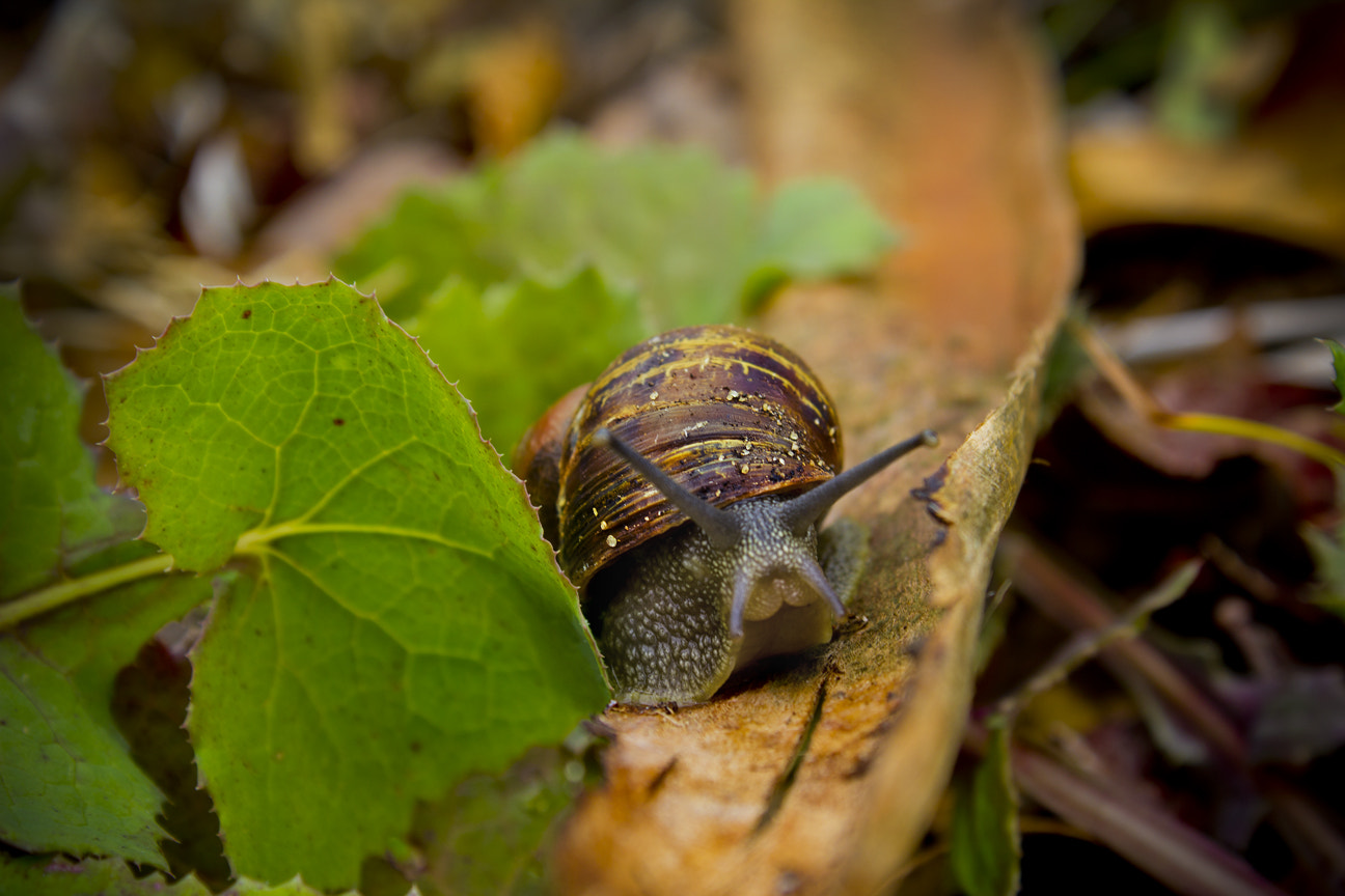 Photograph Snail... With Attitude! by Ross Van der Watt on 500px