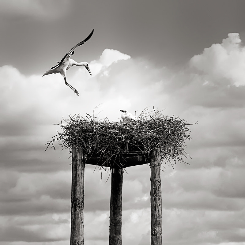 Photograph Stork by Máximo Panés on 500px