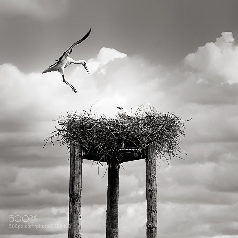 Photograph Stork by Máximo Panés on 500px