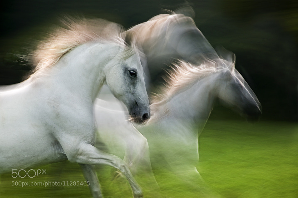 Photograph wind flow by Milan Malovrh on 500px