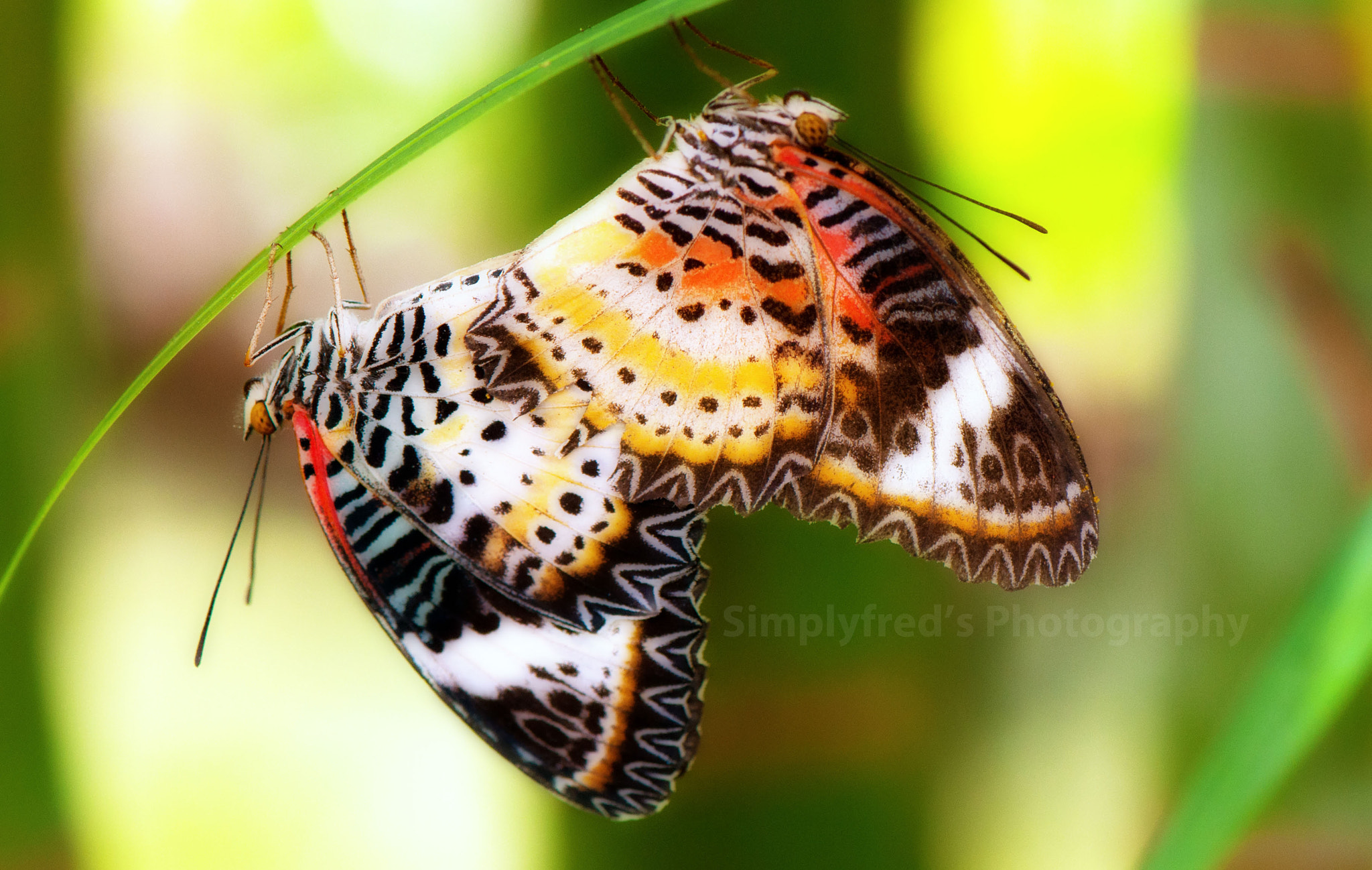Photograph Butterflies love motion by Alfred Quah on 500px