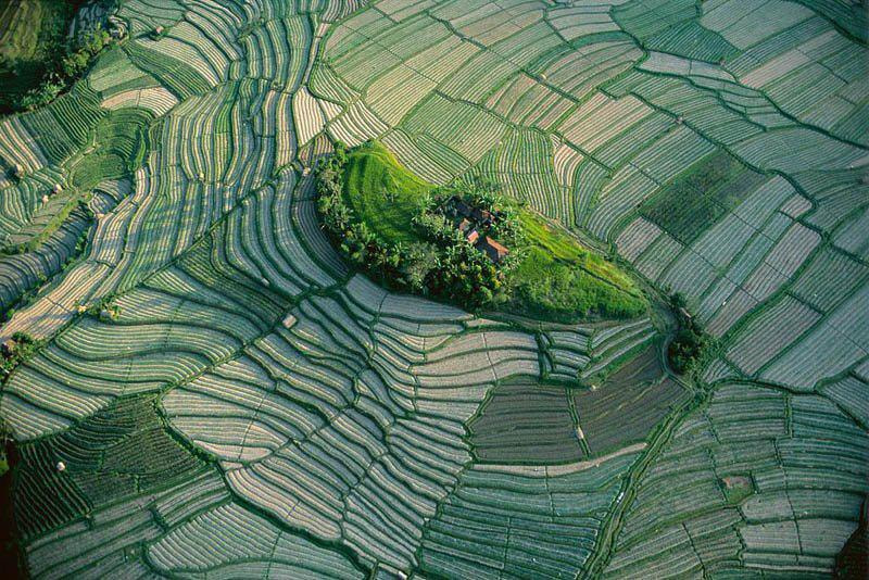 Photograph Growing rice in uttrakhand (india) by Sandeep  Rana on 500px