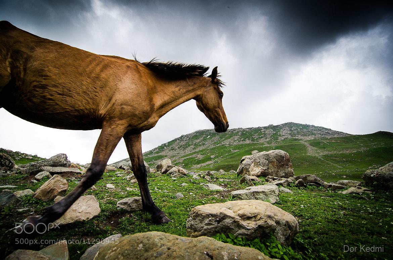 Photograph Wild by Dor Kedmi on 500px