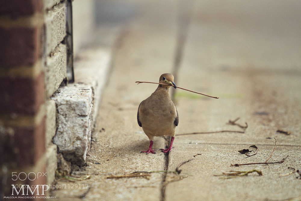 Photograph City Dove by Malcolm MacGregor on 500px