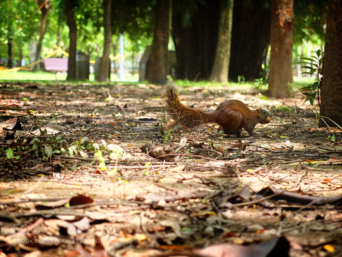 Photograph Squirrel runs by Emily C on 500px