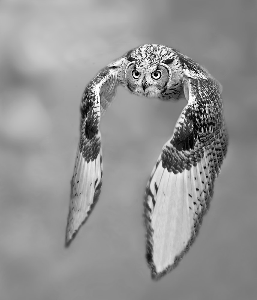 Photograph experimenting with black and white by Stefano Ronchi on 500px
