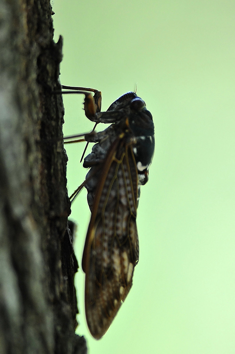 """Photograph """"Continuous-chorus-of-cicadas"""" player by KEN OHSAWA on 500px"""