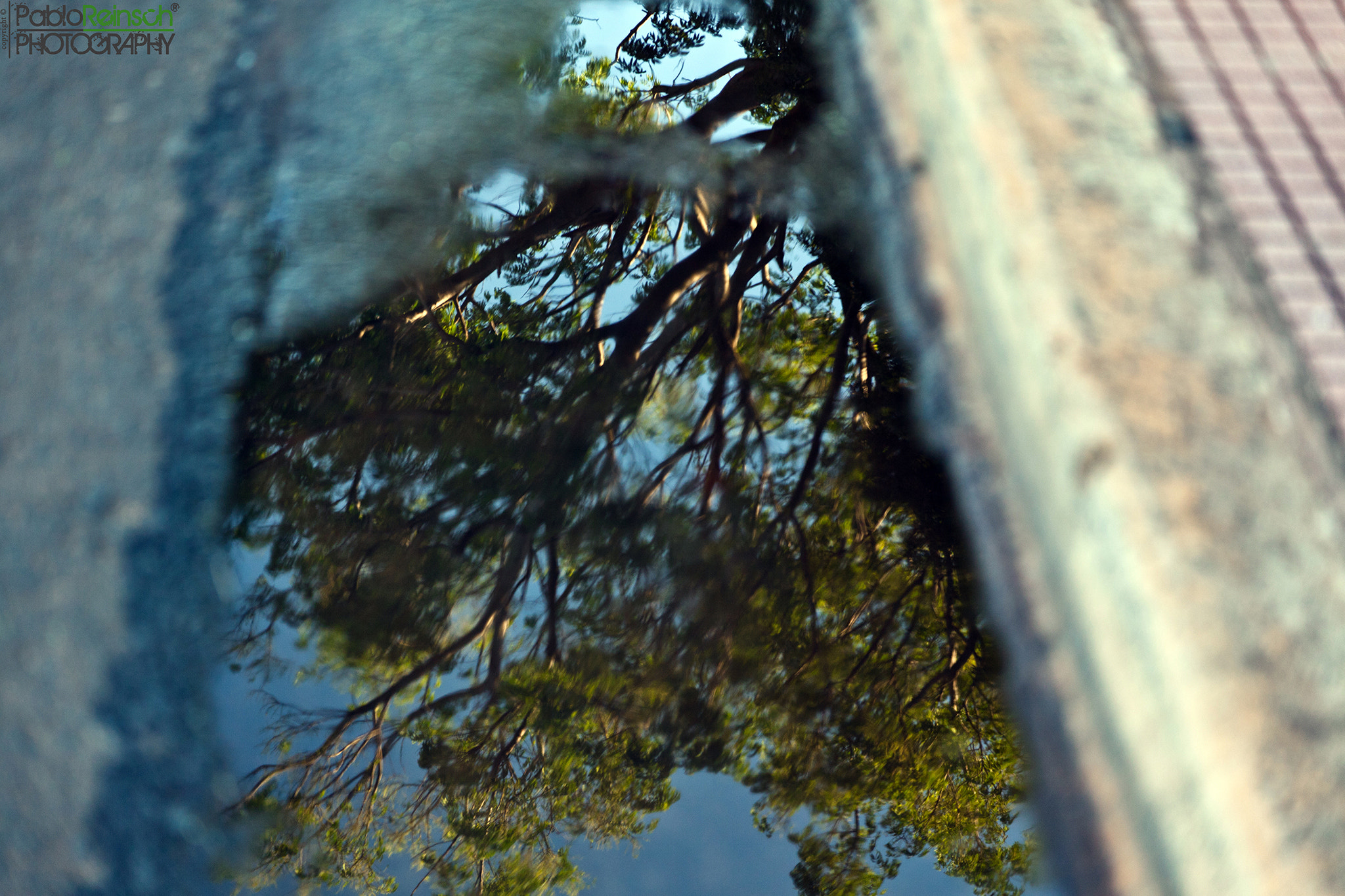 Photograph Reflected tree.- by Pablo Reinsch on 500px