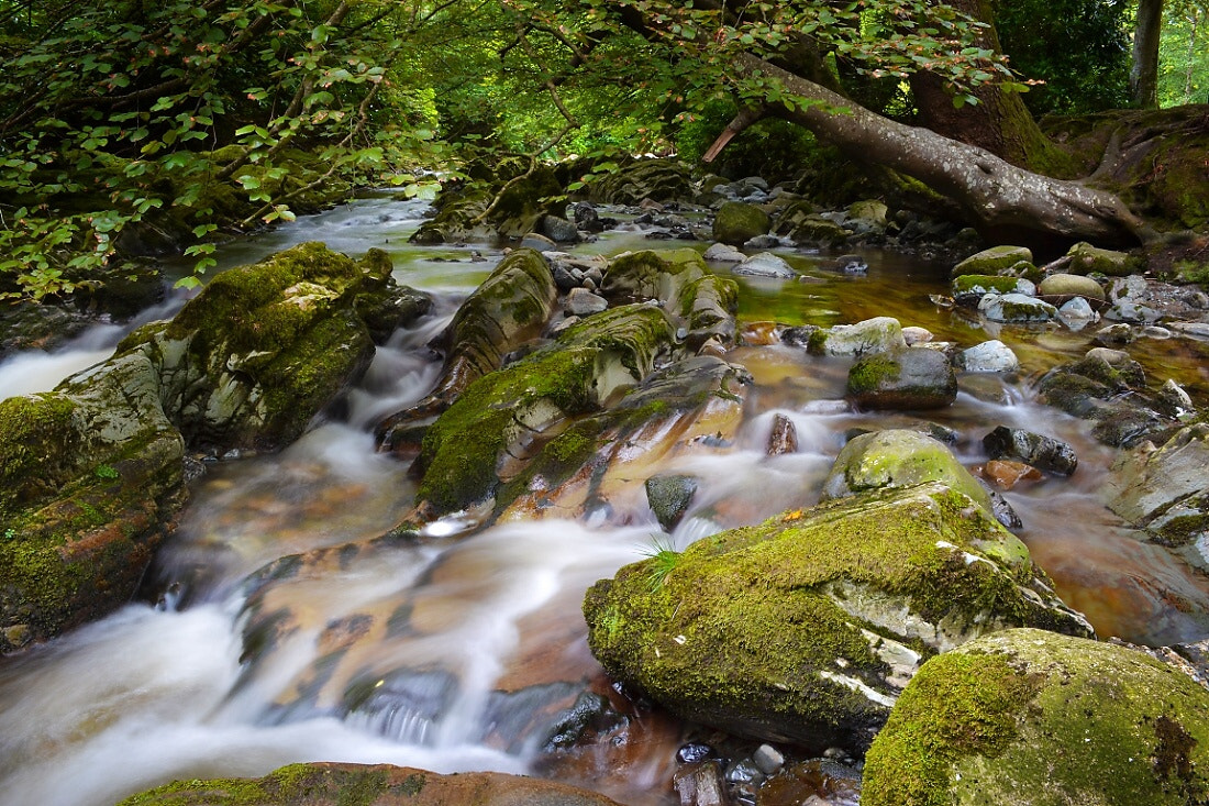 Photograph Tollymore Forest by Emilis Baltrusaitis on 500px