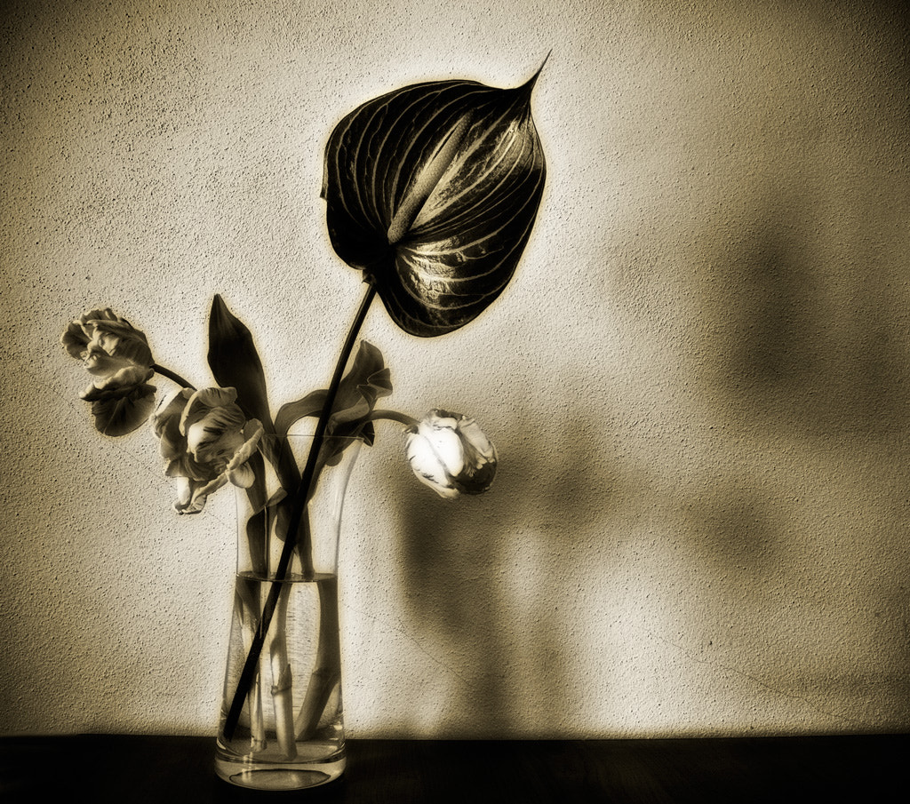 Photograph melancholic flowers by Beau Rivage on 500px
