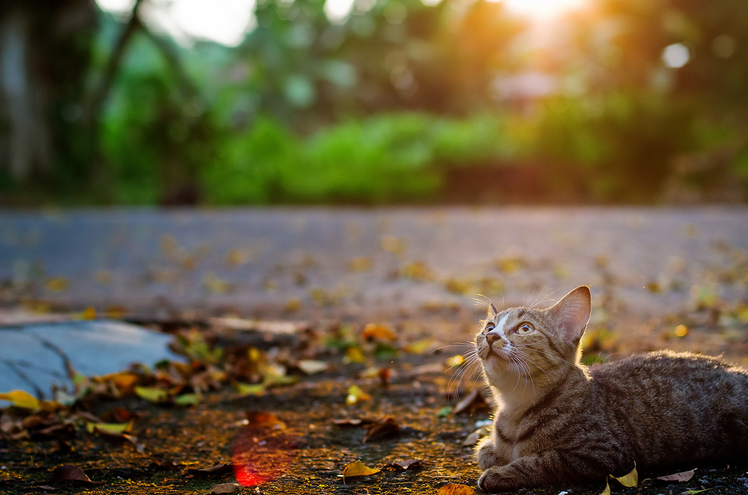 Photograph miow...miow by iiz Kot on 500px
