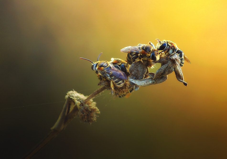 Photograph Gossip by Erwin Astro on 500px