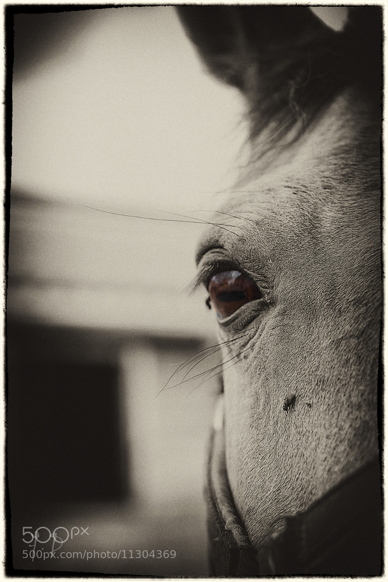 Photograph Animal eyes by dufau julien on 500px