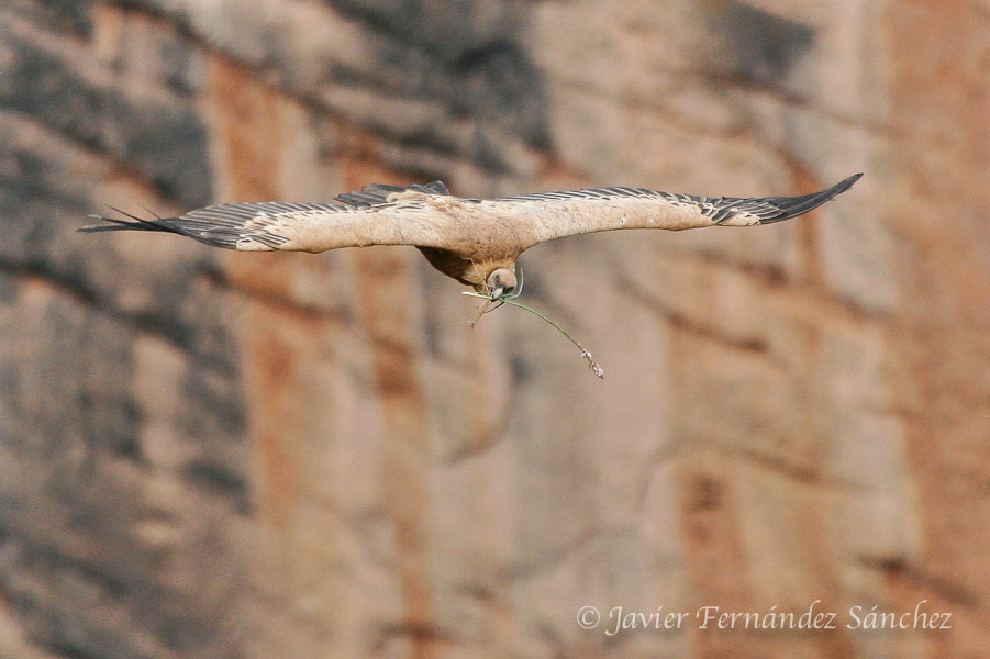 Photograph The vulture in love by Javier Fernández Sánchez on 500px