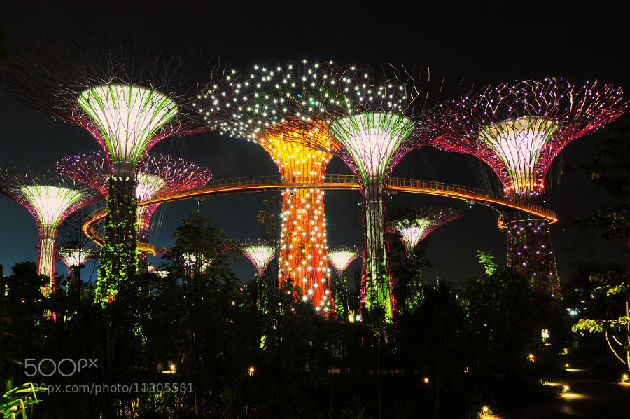 Photograph Super Tree Grove by Heshan  de Mel on 500px