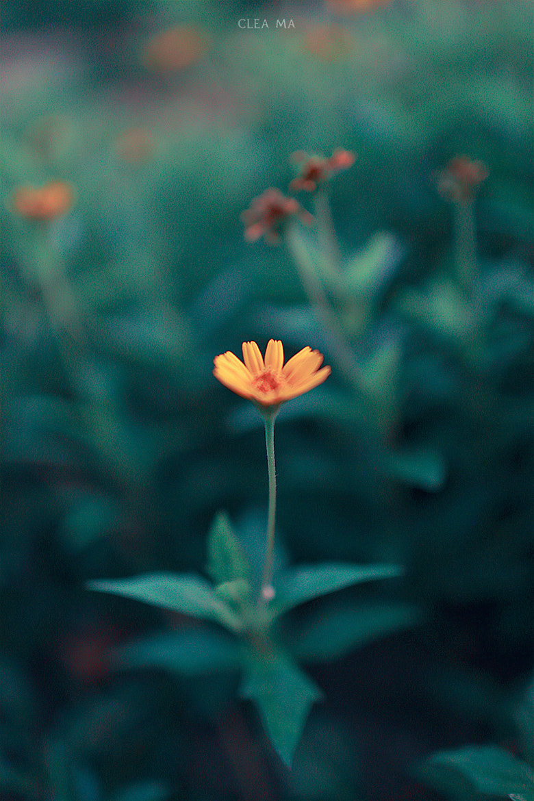 Photograph Untitled by Clea Ma on 500px