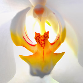 The Heart of Flower by Eri Imam (eriyadi18)) on 500px.com