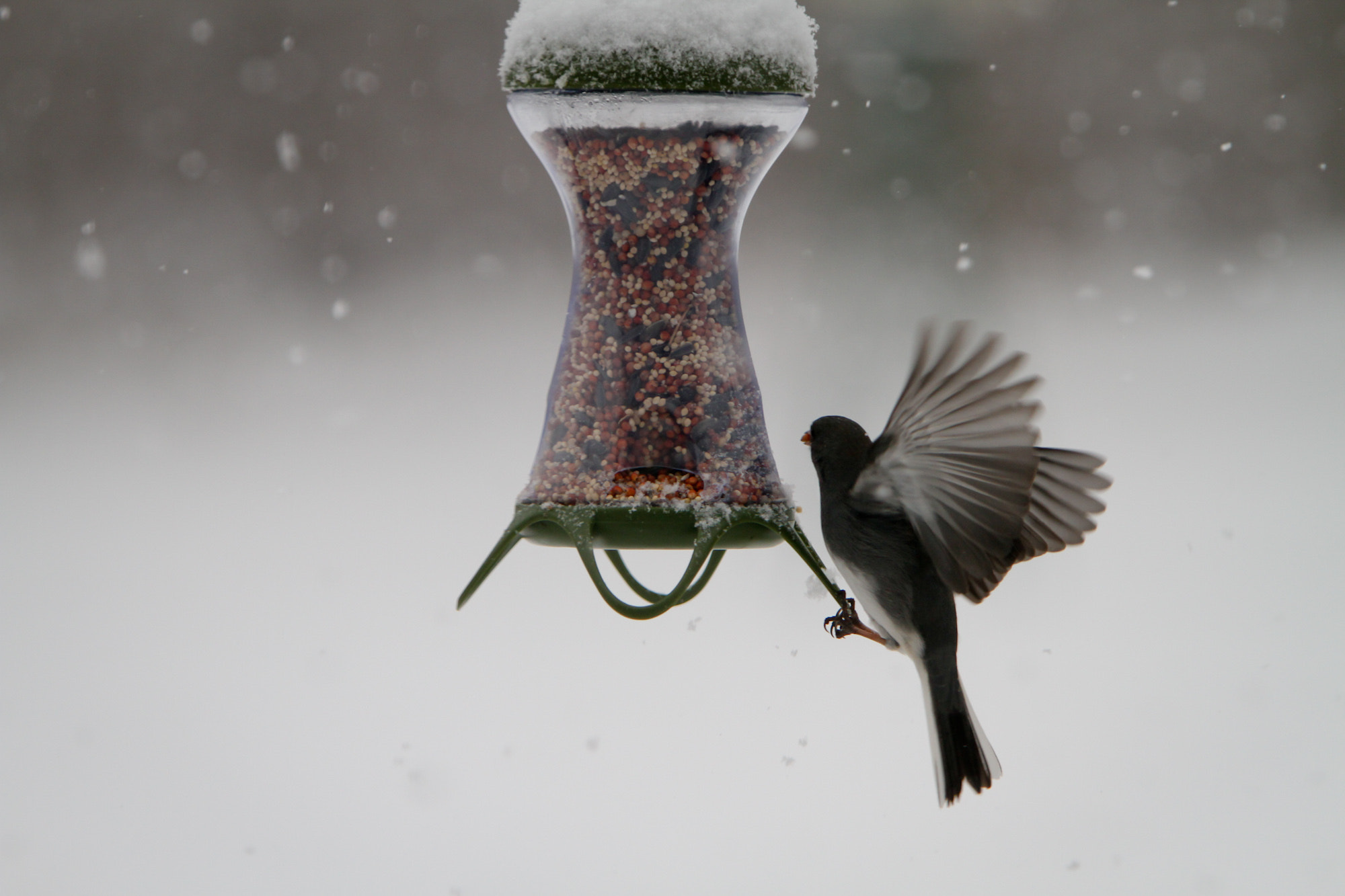 Photograph Snack In the Snow by Dave Dabour on 500px
