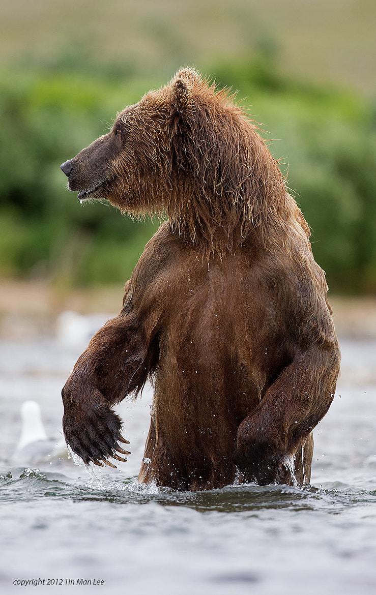 Photograph A Man in a Bear Outfit? by Tin Man on 500px