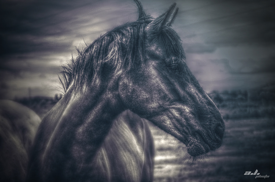 Photograph Hest by ann  ly on 500px