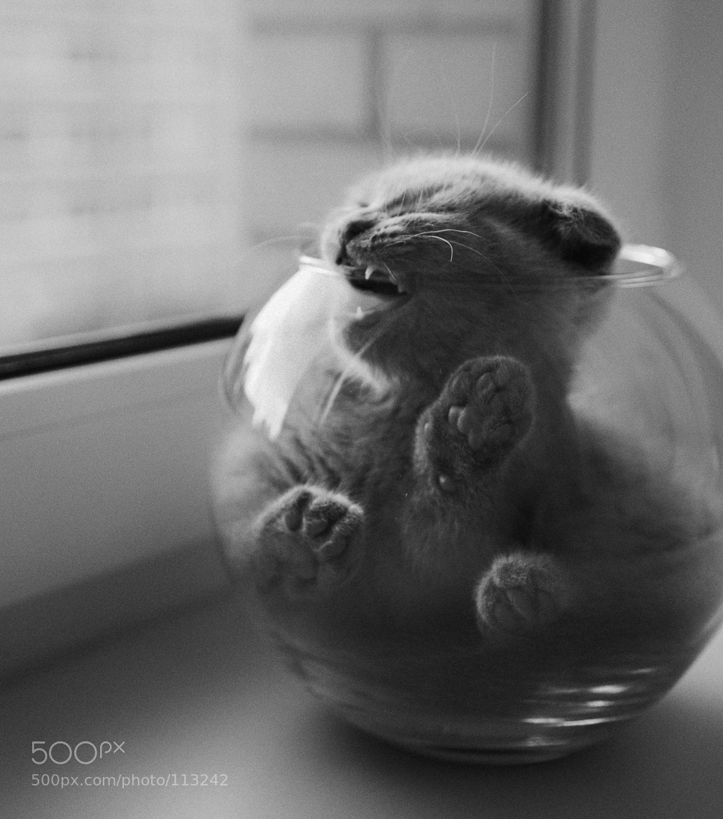 Photograph mon chou by walexis  on 500px