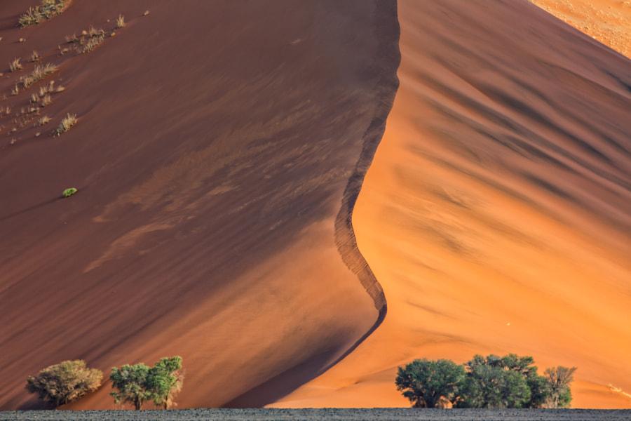 Dune 37