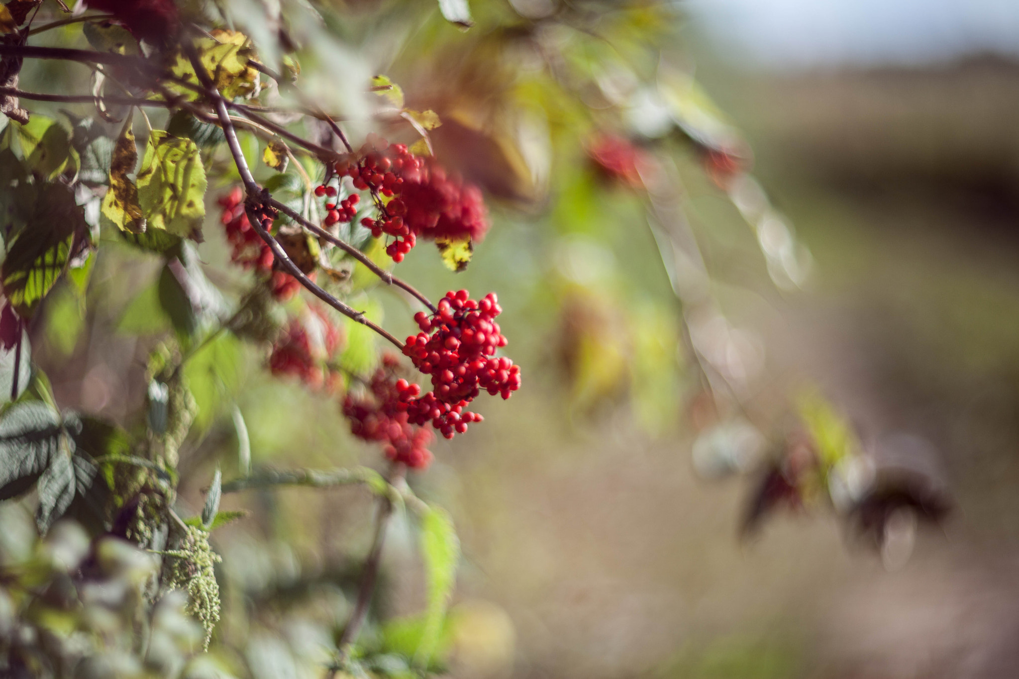 Photograph Berries by Dmitry Saveliev on 500px