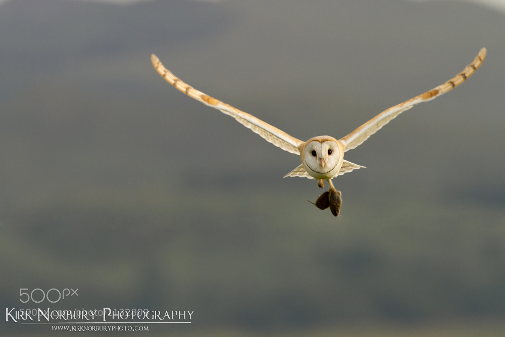 Photograph Flying Into The Wind by Kirk Norbury on 500px