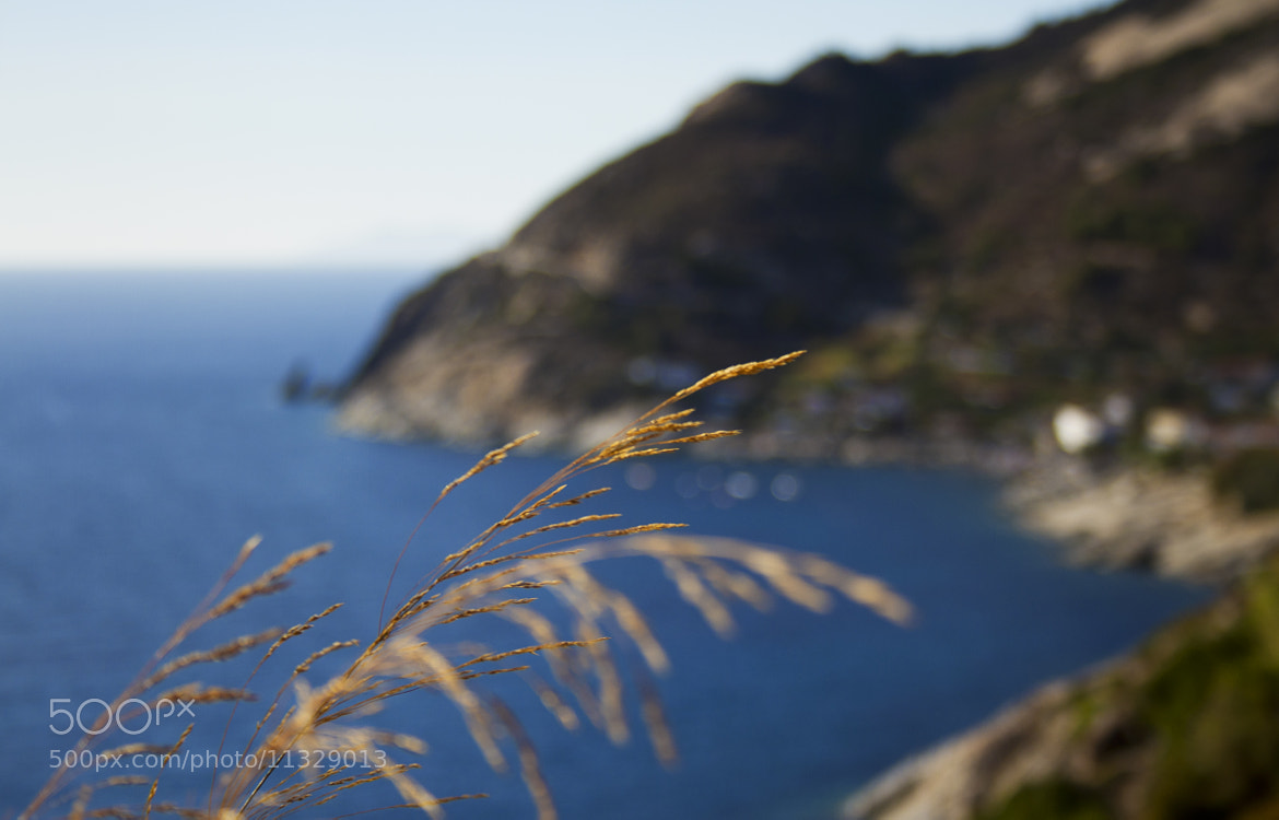 Photograph Gold And Blue by Alex Rocchi Photography on 500px