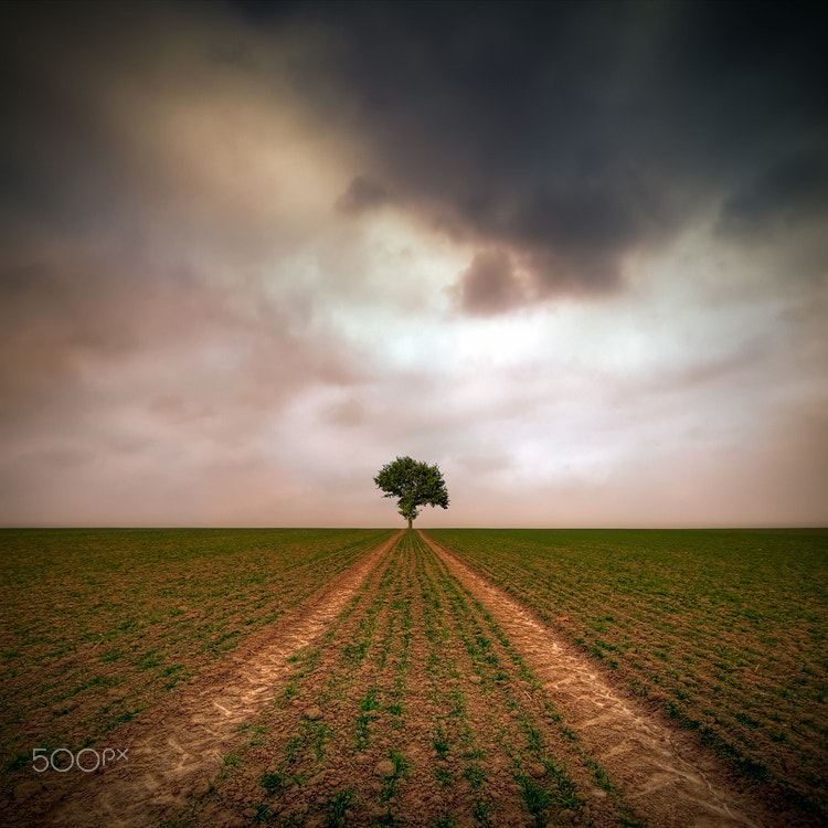 Photograph Tree by Piotr Krol on 500px